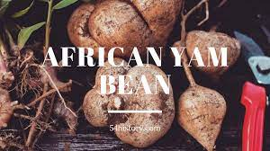 Discover the unique history and benefits of African yam bean | 54History